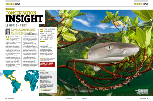 BBC Conservation Insight - Lemon Sharks 2017