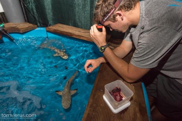 Physiology shark Experiments at CRIOBE, Moorea