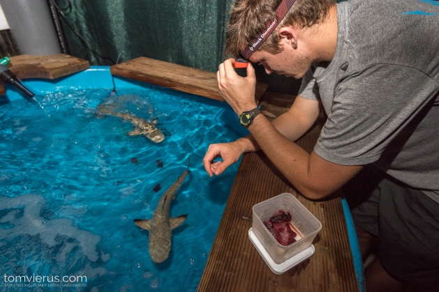 Physiology shark Experiments at CRIOBE, Moorea